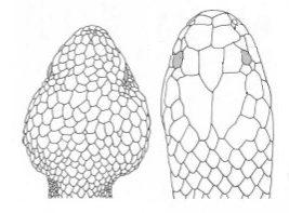 diferencias entre viboras y culebras
