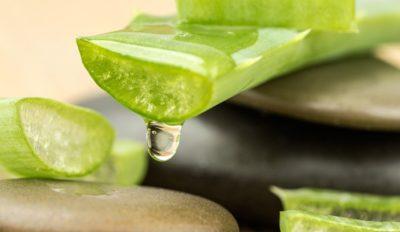El aloe vera es un buen remedio para acabar con el picor que provoca la picadura de un mosquito. ShutterStock